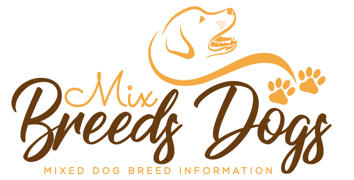 Mix Breeds Dogs – The Comprehensive Guide About Mix Breed Dog